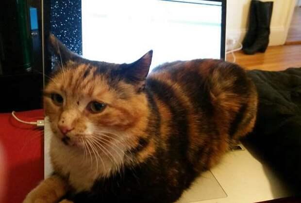 Кошка побегала по клавиатуре и выиграла 100 тысяч долларов