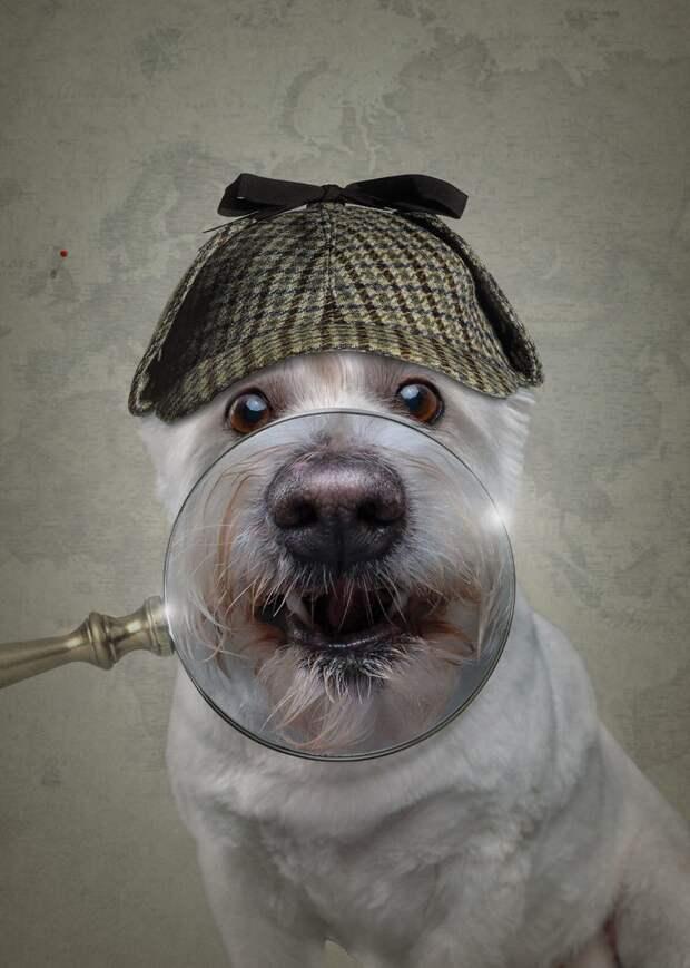 9. Отправляемся на поиски! Вперёд! Забавные фото, анималист, домашние животные, очеловечивание, портреты животных, собака, собаки, фото собак