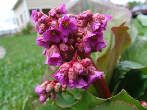 Прудик с лекарственными растениями