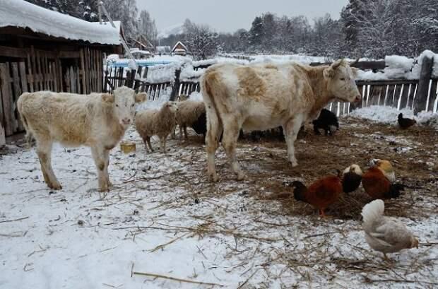 Мясо со своего подворья