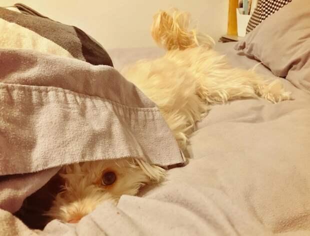20 забавных фото собак, которые думают, что великолепно спрятались пес, прятки, смешная собака, смешной, собака
