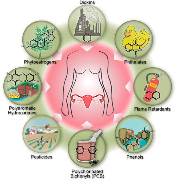 Химикаты, которые разрушают гормоны