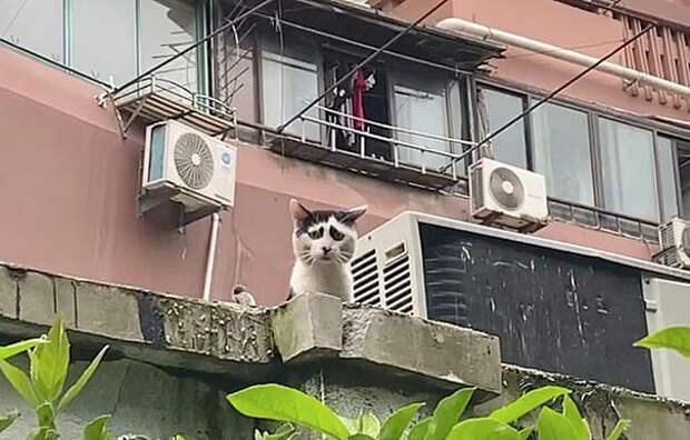 Новый мем: китайский кот проникновенно иллюстрирует это год