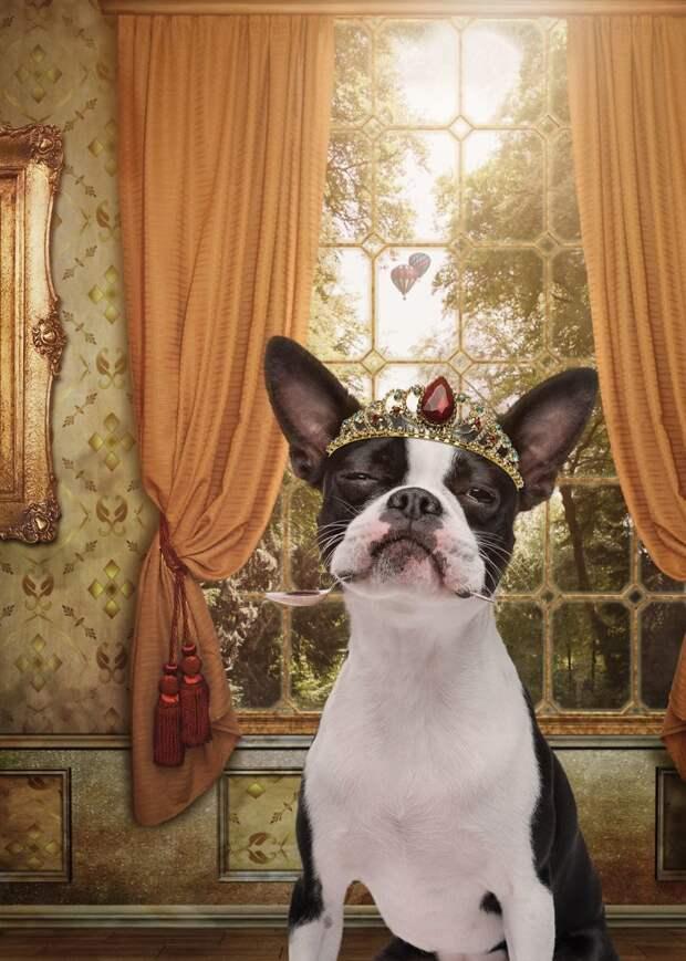 10. Принцесса Лола Забавные фото, анималист, домашние животные, очеловечивание, портреты животных, собака, собаки, фото собак