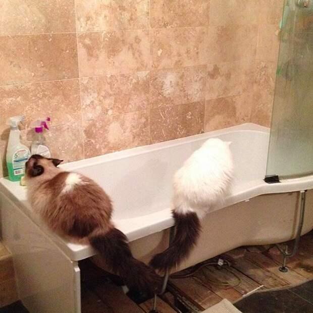 5. Возникло желание принять ванну? Давай, до свидания домашний питомец, животные, коты, лежанка, милота