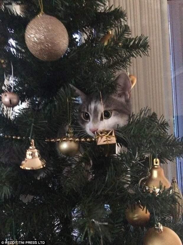Блестяшки! Глаза разбегаются! животные, кот, коты, кошки, новый год, приколы с животными, фото, юмор