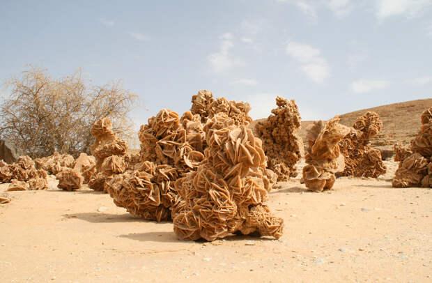 Удивительные жители и находки в пустыне