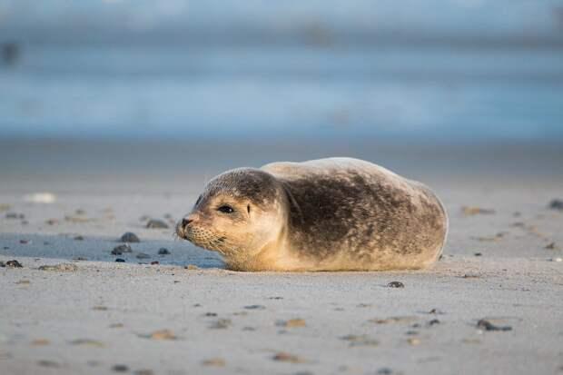 Иcтощённого тюленёнка спасли в Петербурге