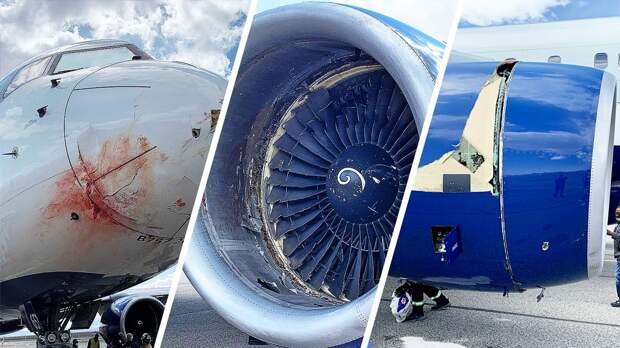 Самолет команды НБА «Юта Джаз» совершил аварийную посадку после столкновения со стаей птиц: фото