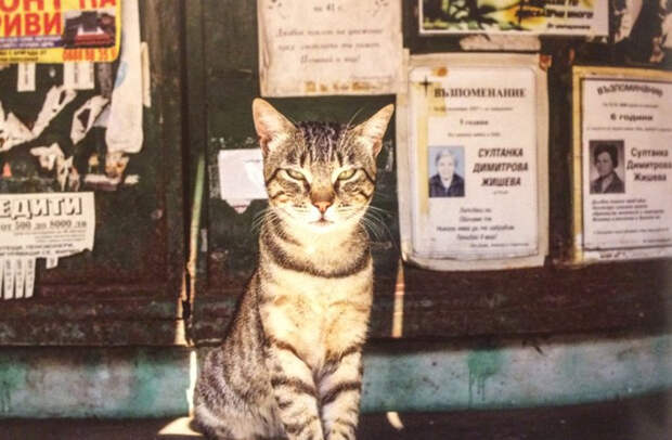 Почему в Болгарии везде висят фотографии людей?