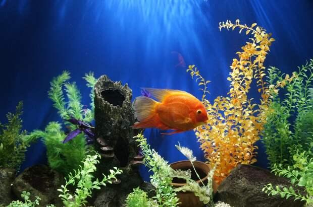 4 прикольных факта о том, как рыбы пьют воду