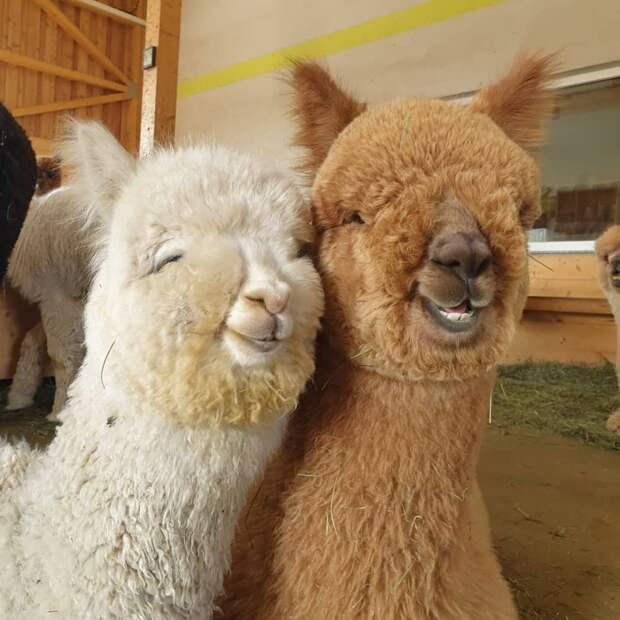 9 фото беззаботных животных, которым не надо сидеть на карантине