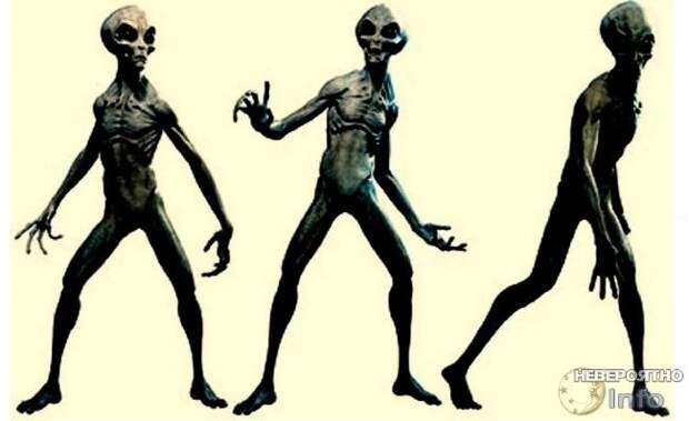 Есть ли на Земле пришельцы и кто они?