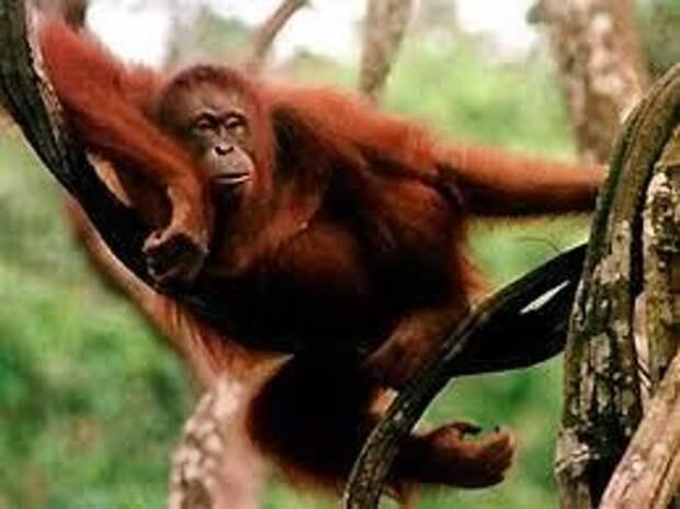 Самые интересные факты о животных
