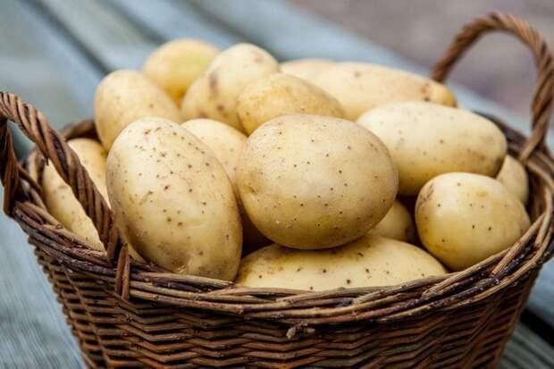 Картофель продукты, способы хранения продуктов, холод, холодильник, хранение