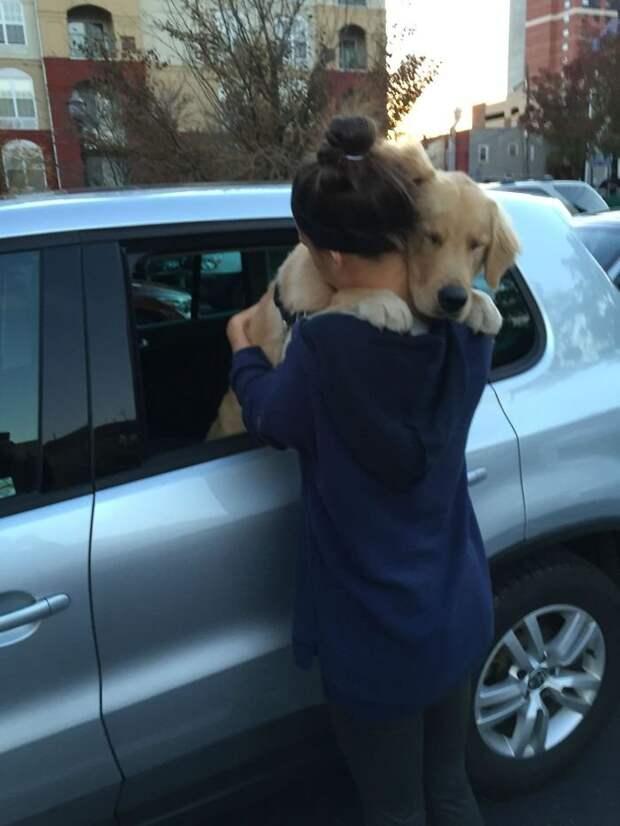 Любовь и преданность собак растопит ваше сердце