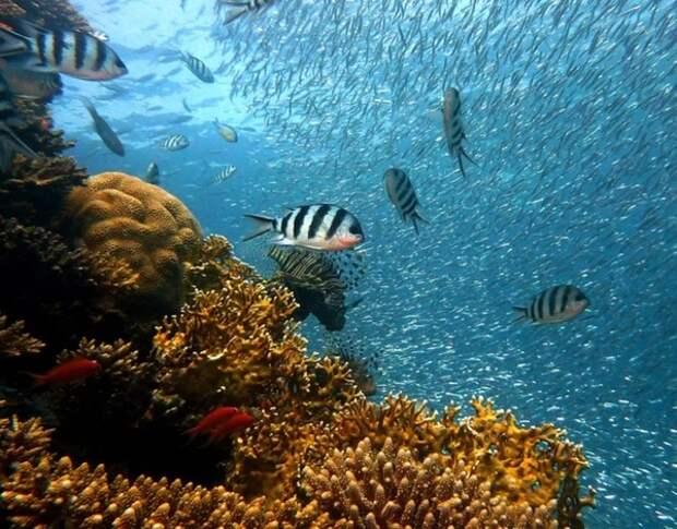 На радость Грете Тунберг: Государство Палау запретило солнцезащитные средства