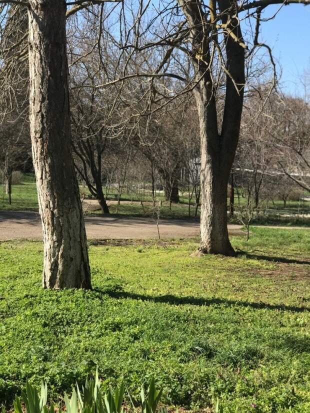Севастопольцы прощаются с парком у больницы