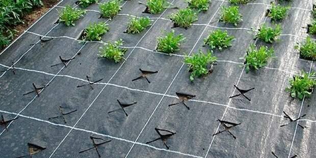 Как избавиться от сорняков раз и навсегда? Секреты чистых грядок