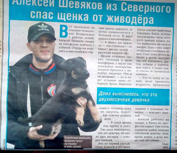 Семья москвичей спасла щенка и котенка. Теперь они живут вместе