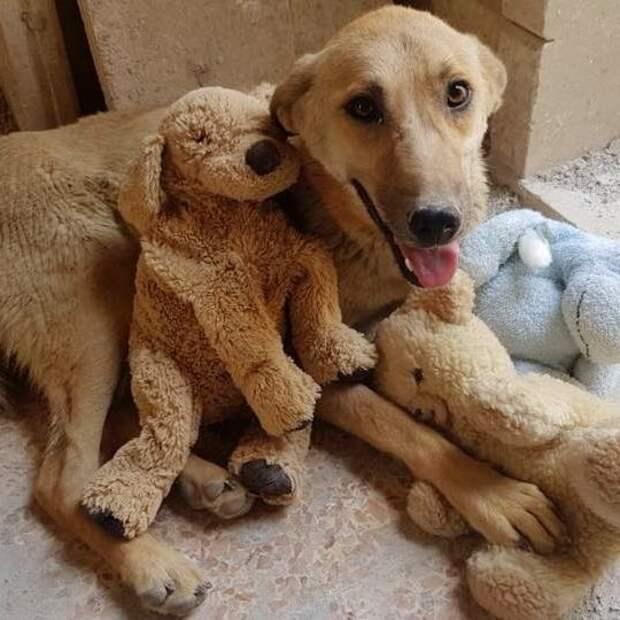 В Сирии оставшаяся без щенков собака усыновила брошенного котенка