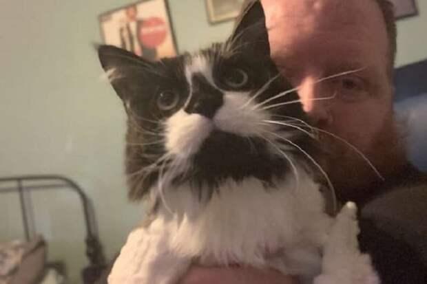 Мы переехали в новый дом и сделали необычную находку в подвале, это был одинокий кот, который нуждался в срочной помощи.