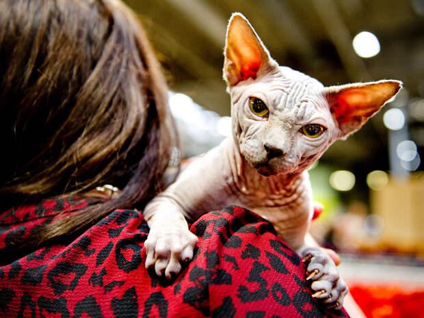 Supreme Cat Show 2017 — крупнейшая выставка кошек в Европе