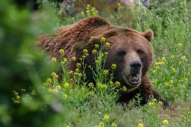 Гора Цаагваа — тёмное царство медведей, которое люди веками обходят стороной