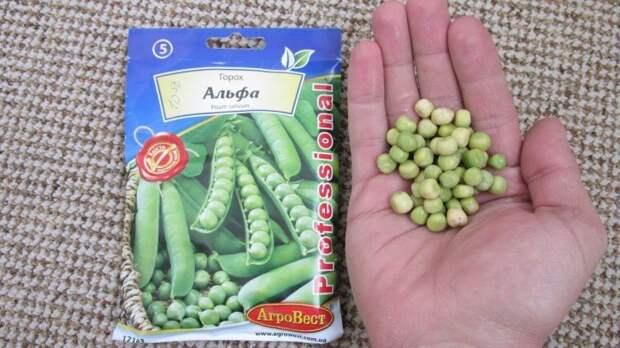Горох и фасоль будут расти быстрее. /Фото: i.ytimg.com