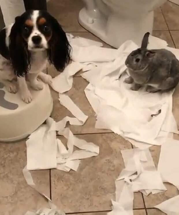 Туалетная бумага и животные