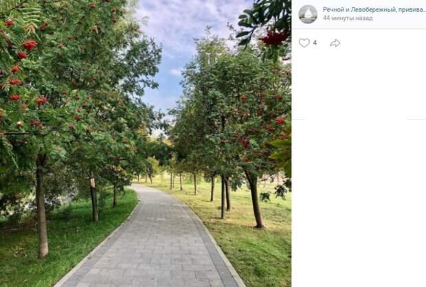 Фото дня: костры рябин в парке Дружбы