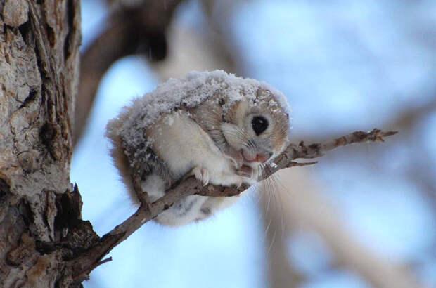 Ледышка в твоих руках или Как спасти замёрзшее животное? Случай из практики + советы эксперта