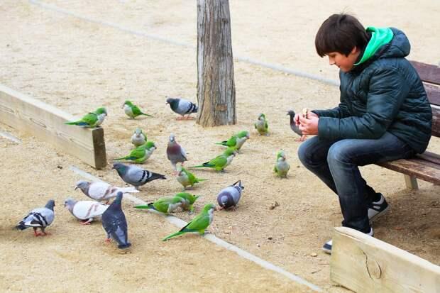 10 мест, где голубей заменяют экзотические животные