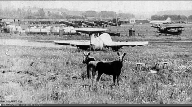 Фотофакт: лоси и самолёты на Тушинском аэродроме