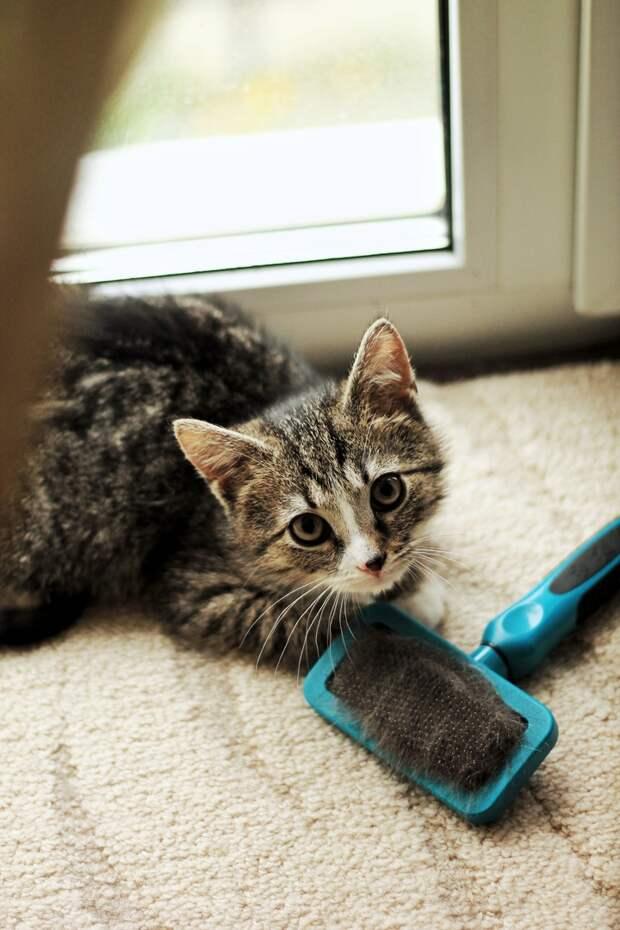 Письмо с большой просьбой от маленьких мышек!