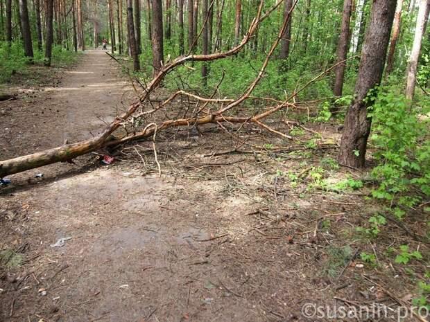 В Можгинском районе Удмуртии опасные отходы попали в почву