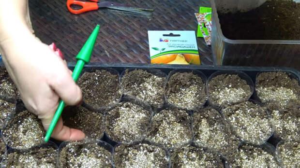 Невероятно простая хитрость, как вырастить очень крупный лук