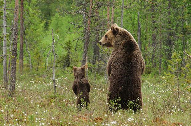 animal-parents-32