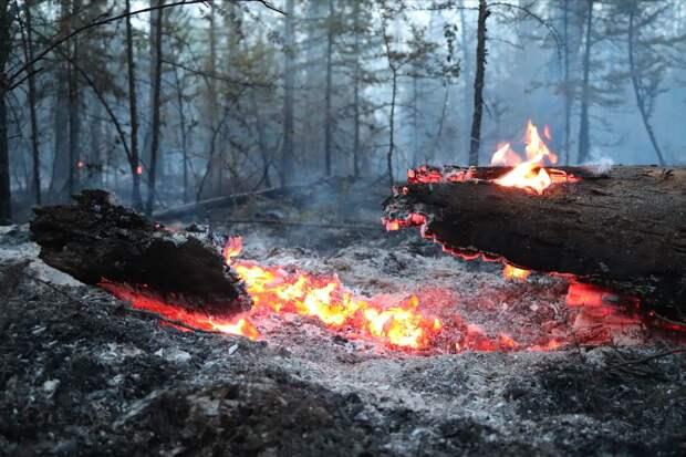 В Минприроды заявили о тяжелой обстановке с лесными пожарами