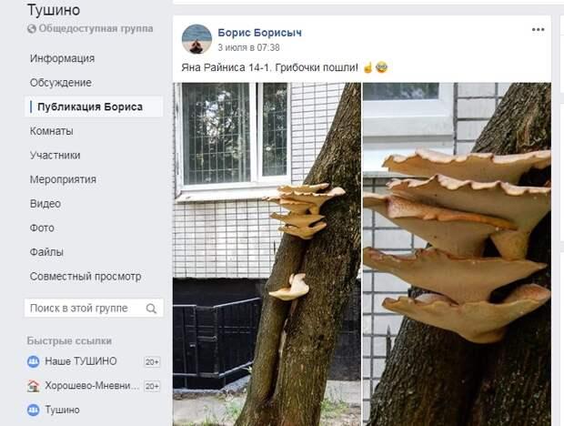 Фото дня: на Яна Райниса выросли грибы