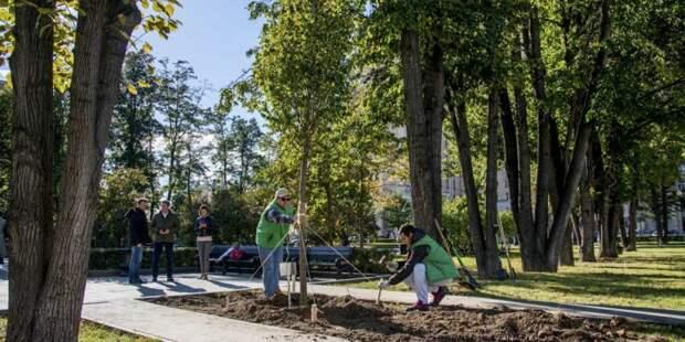 Более 700 кустов высадят в Хорошевском этой весной