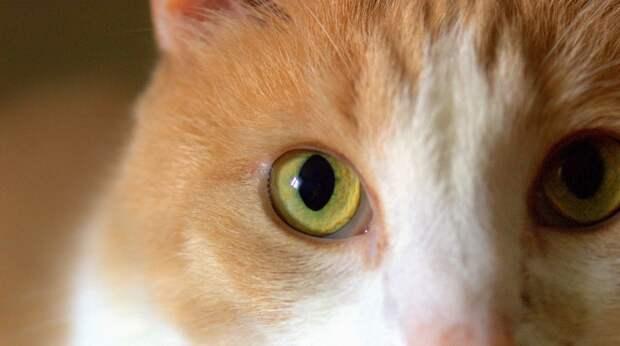Уличный кот, которого однажды накормила девушка, вернулся и ждал её на работе