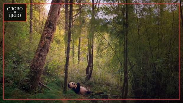 Пять вдохновляющих фильмов о природе и планете