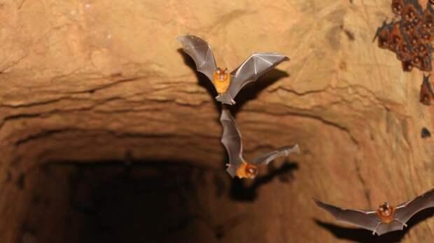 «Обязаны знать о них больше»: учёные заявили об обнаружении новых видов летучих мышей