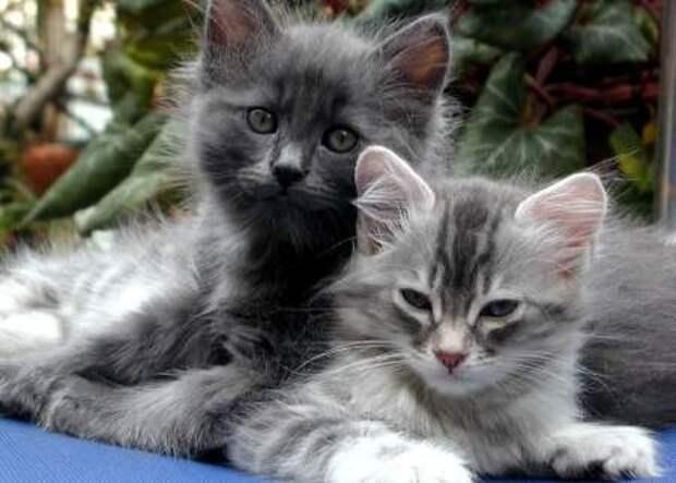 Коты и кошки могут спать в сутки до 16 часов