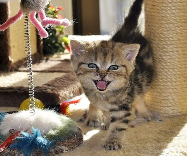 http://newpix.ru/wp-content/uploads/2012/05/Sylvie_Meier_Kitty_18.jpg