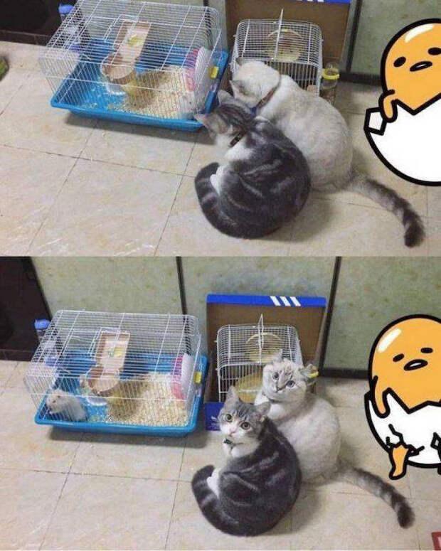 Забавные животные для хорошего настроения