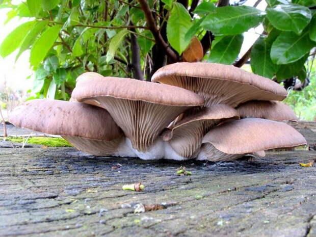 Вот как охотится хищный гриб