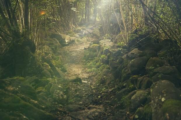 Участок леса в Балезинском районе залили отходами животноводства