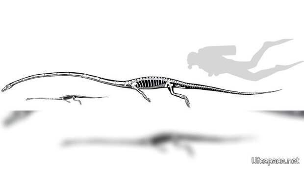 Tanystropheus longobardicus и Tanystropheus hydroides